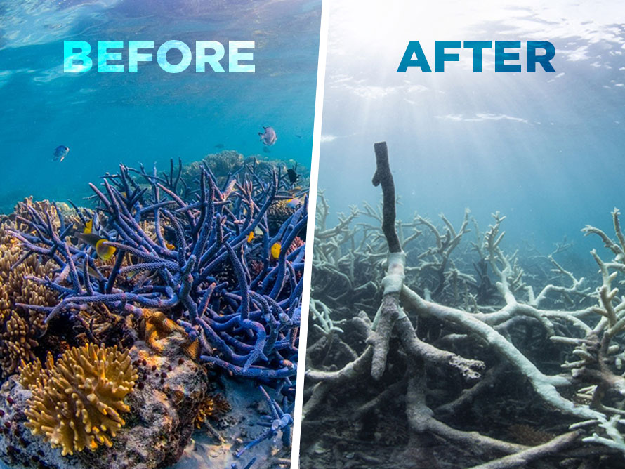 2016-06-09_corals